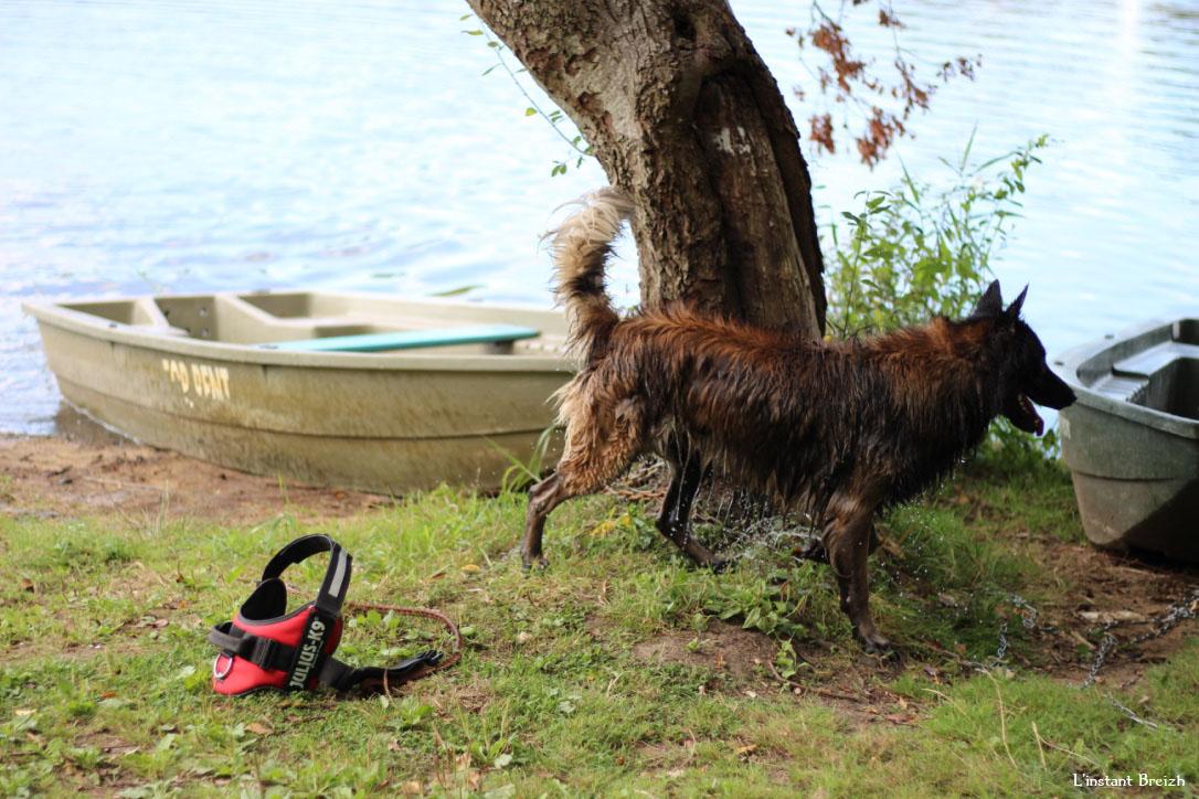 Le chien mouillé a piqué une tête dans le lac
