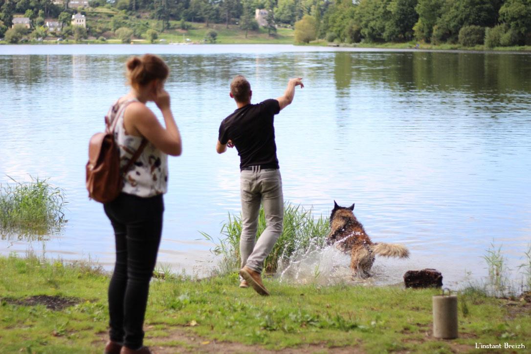 Le chien s'amuse dans le lac