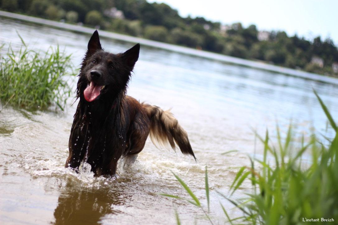 Le chien attend qu'on lui lance le bâton dans l'eau