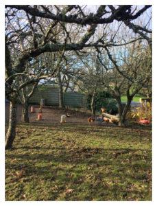 Des poules dans le jardin de la maison louée à Plogoff
